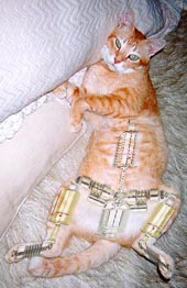 cat dynamics cat technology specialists cat parts 170x262