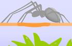 Spider Fighting