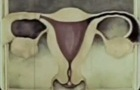 vagina fish